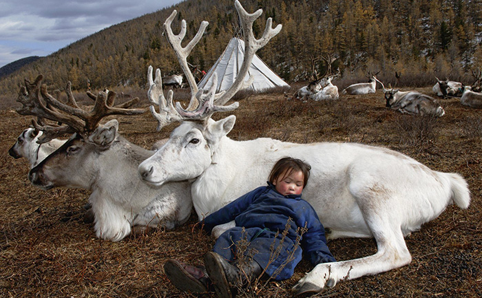 boy sleeping on reindeer