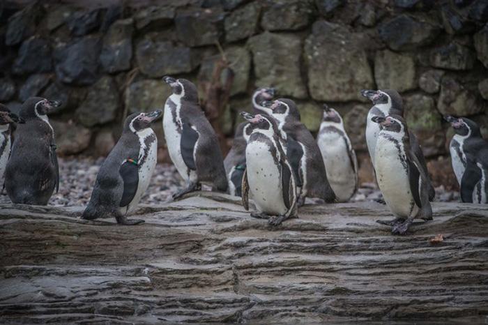 iceland supermarket penguins
