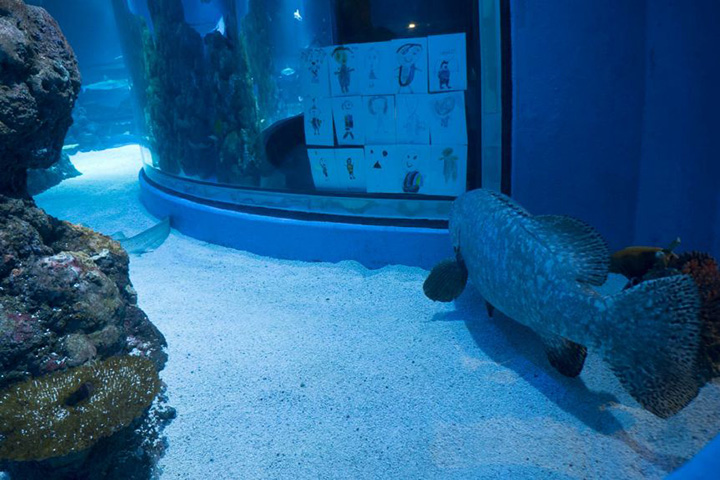 kids send drawings to lonely fish Cairns Aquarium