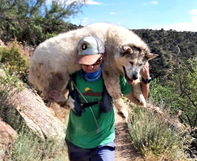strangers rescue dog hike new mexico