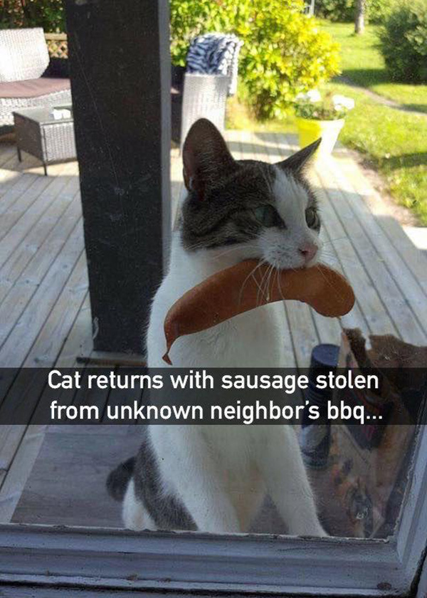cat steals sausage