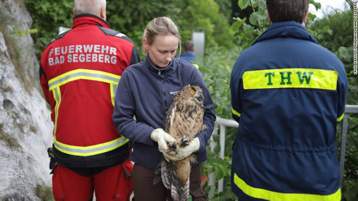rescuers save owl in well