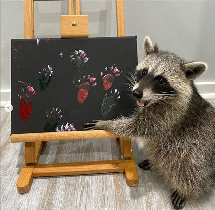 raccoon paints