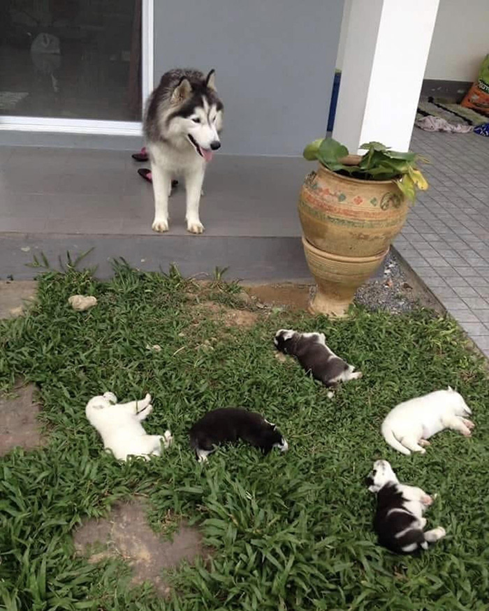 puppies sleeping in yard