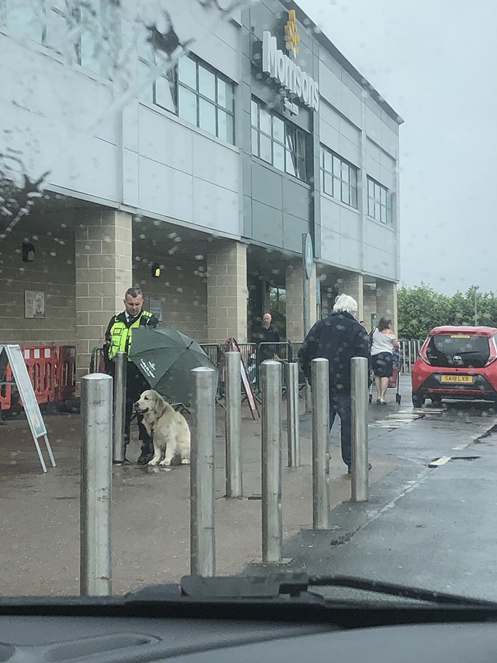 security guard uses umbrella for dog in rain