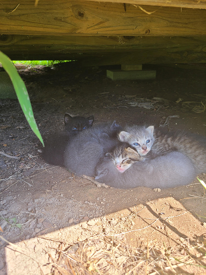 kittens under shed