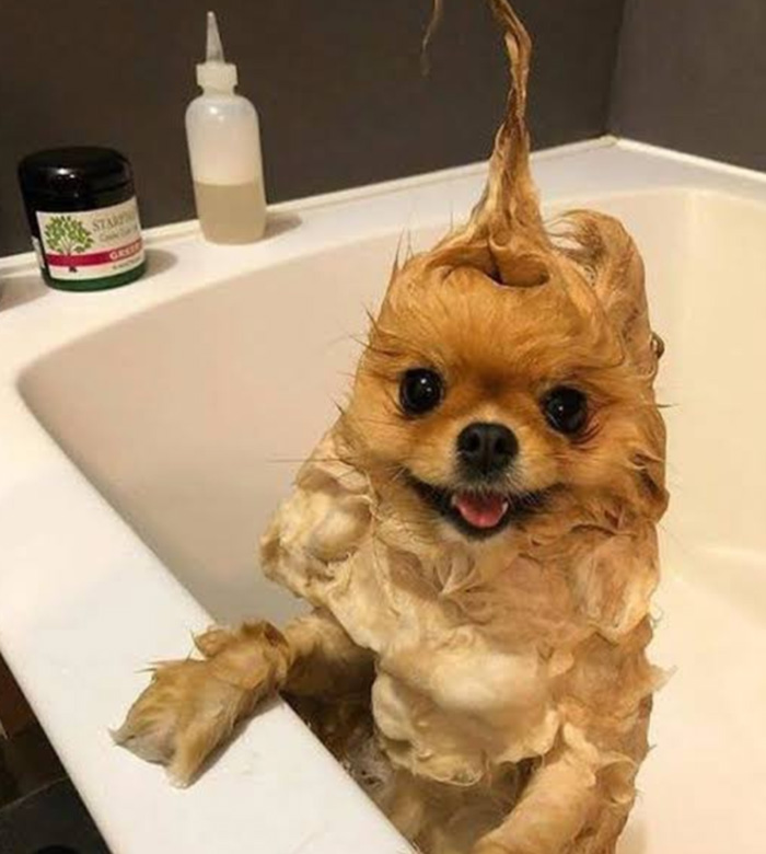 dog shower time
