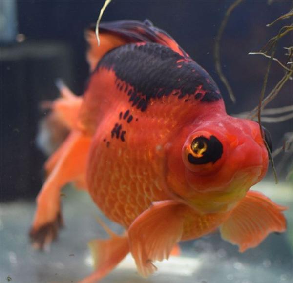 fish transformation