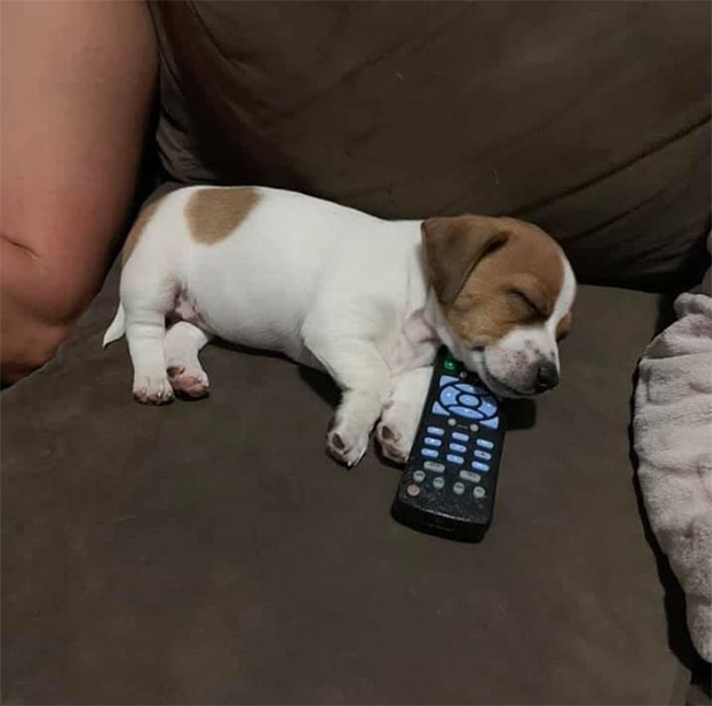 potato puppy remote
