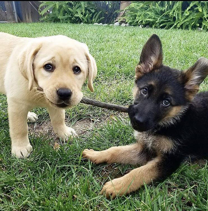 puppies making friends