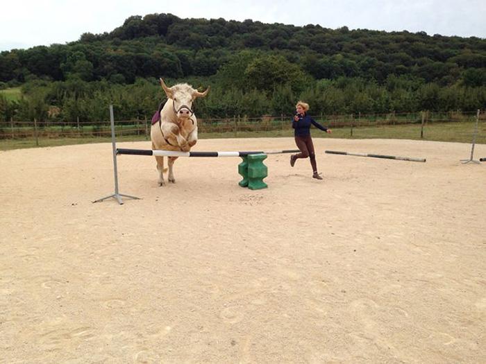 Aston the bull
