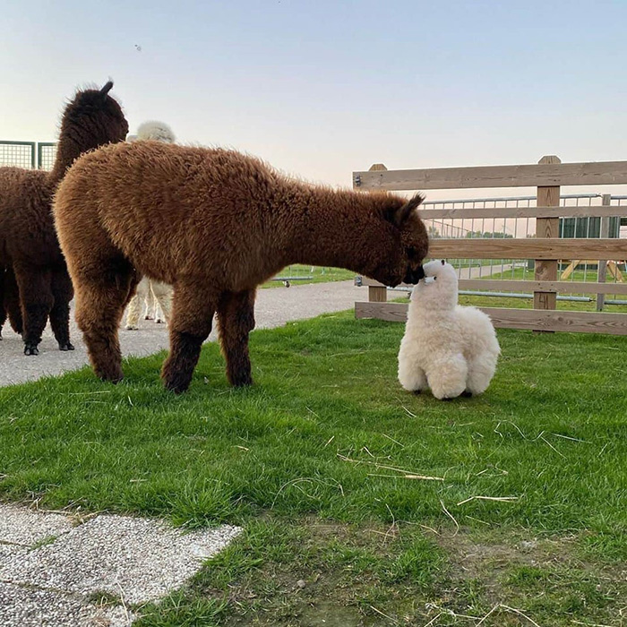 alpaca mini stuffed animal
