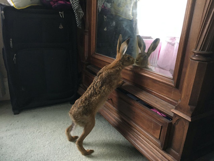 family rescues hare