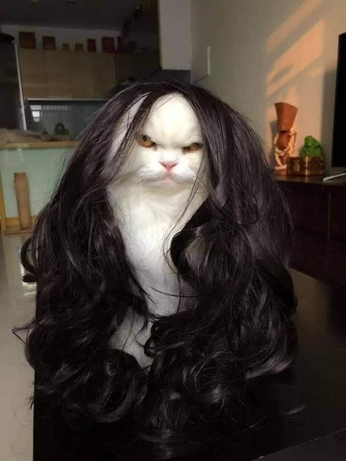 wig on cat