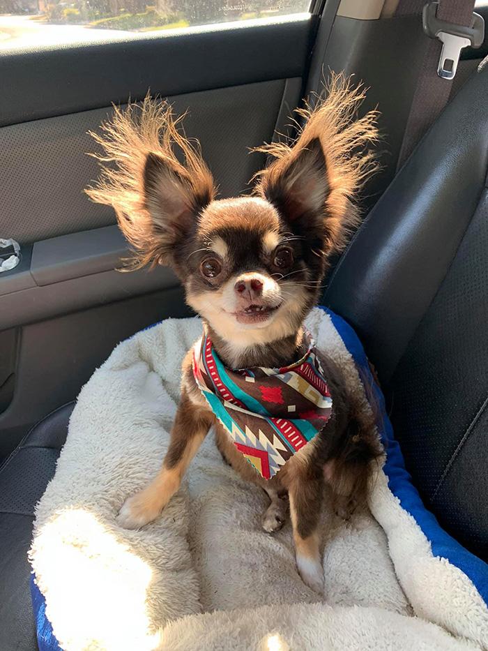 dog in the AC cute