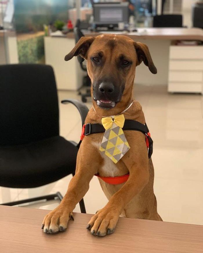 stray dog job at car dealership