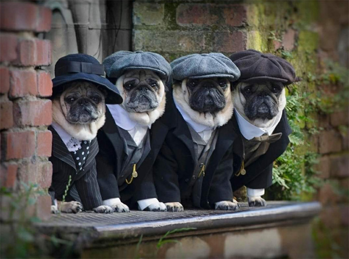 the puggy blinders