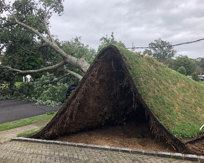 NY winds caused yard to pull up
