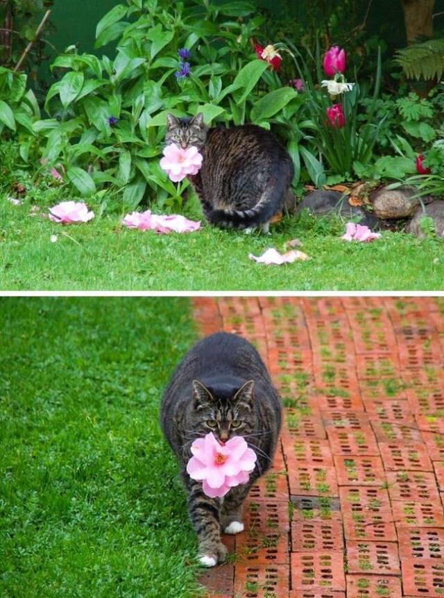 cat brings flowers to owner