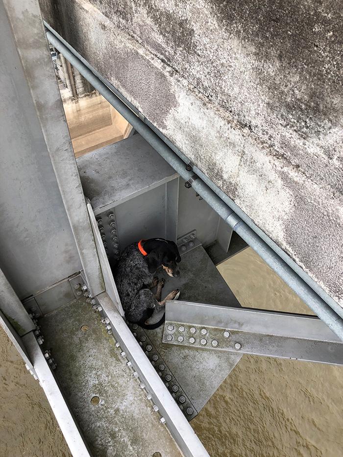 dog rescue mississippi bridge