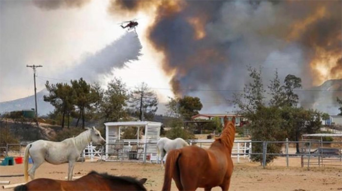 horses survive wildfires