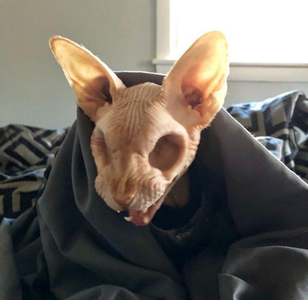 real life halloween cat