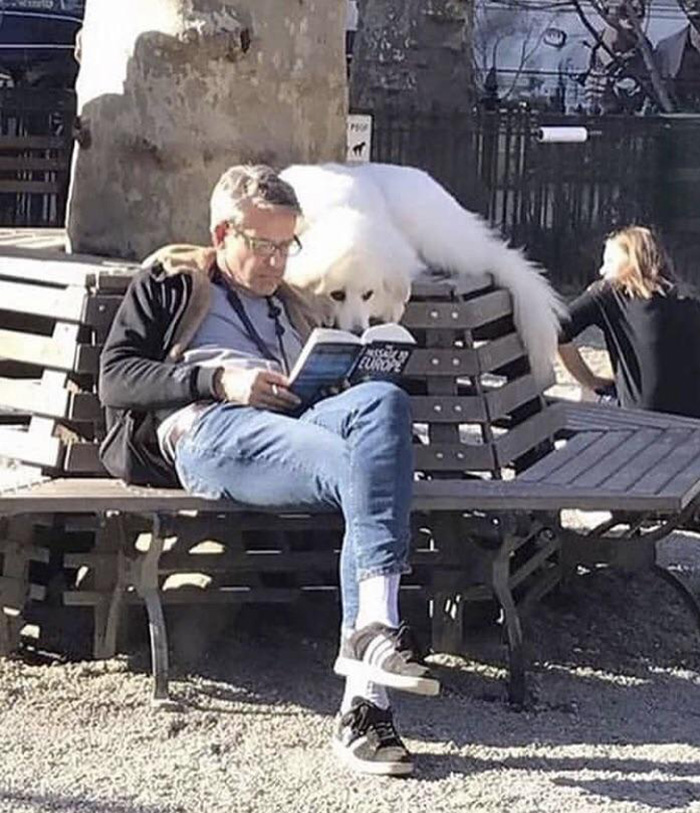 dog reads book with owner at park