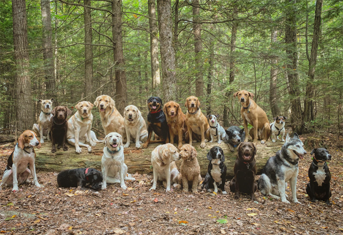 group dog photo