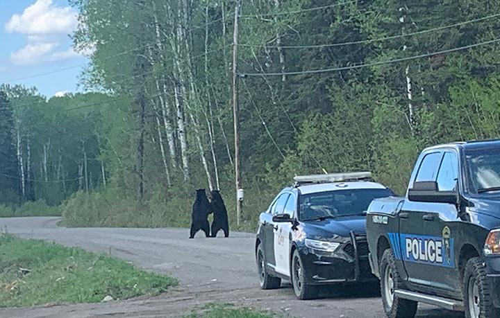 bears embrace