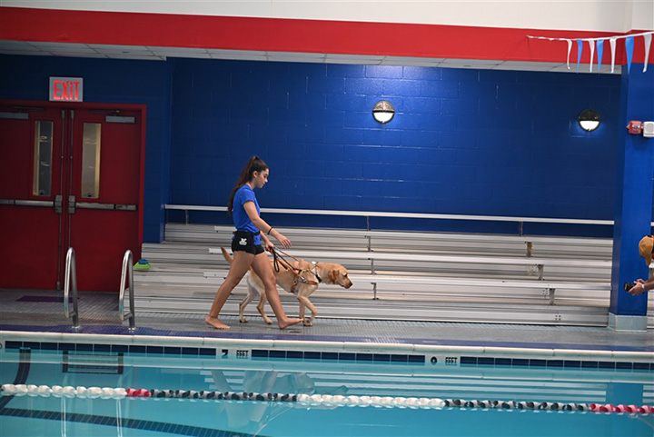 guide dog for blind swimmer
