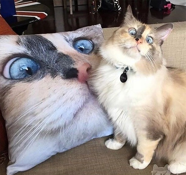 cat funny face pillow
