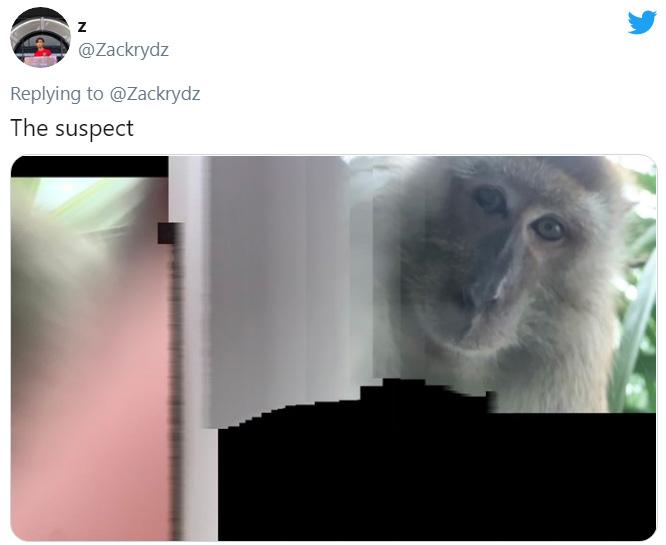 monkey steals phone