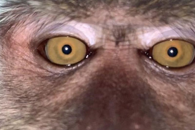 monkey steals phone and takes selfies