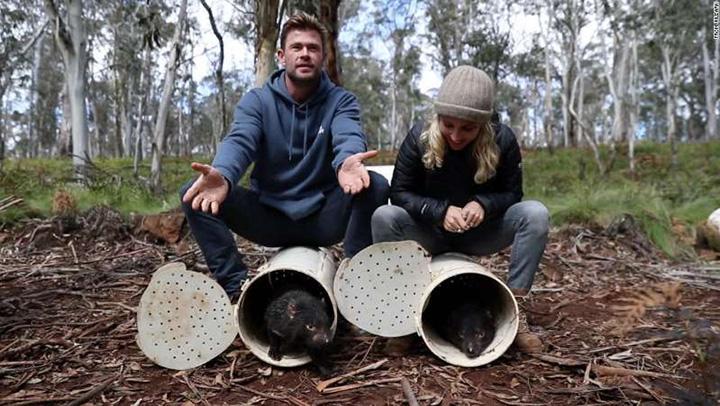 tasmanian devils australia