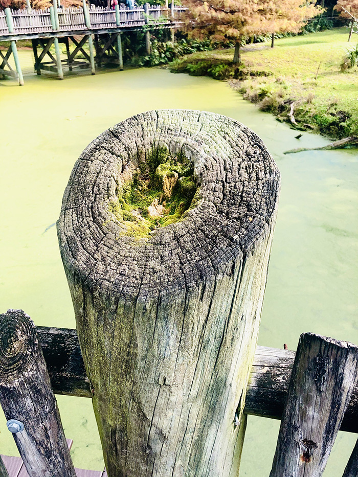 top of fence post