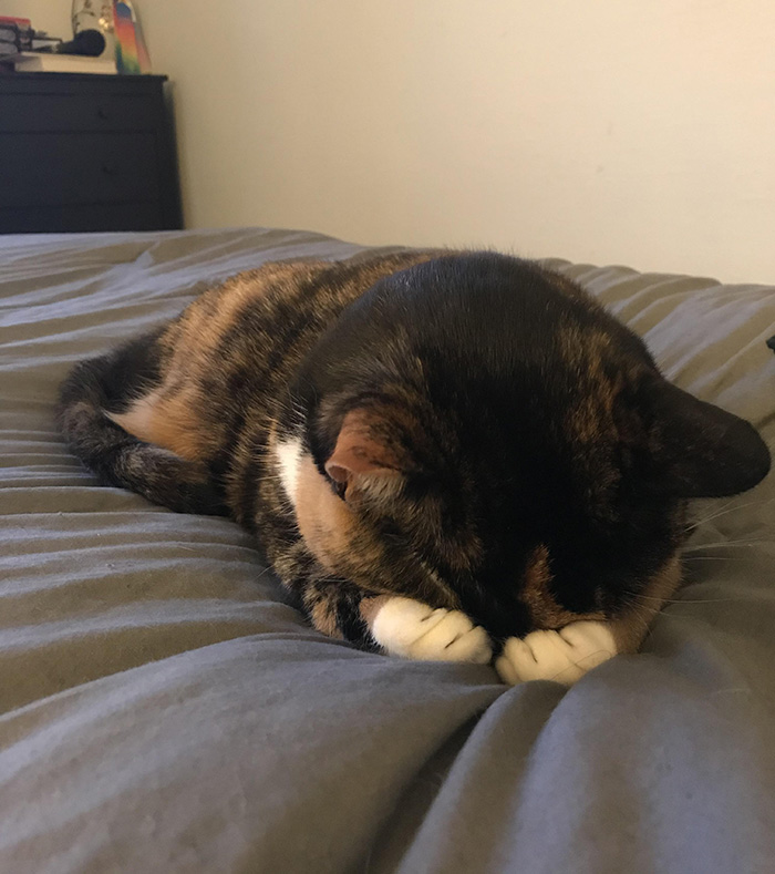 cute cat paws over eyes