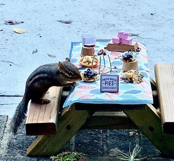 restaurant for chipmunk