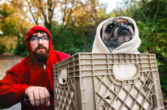 pug Halloween ET