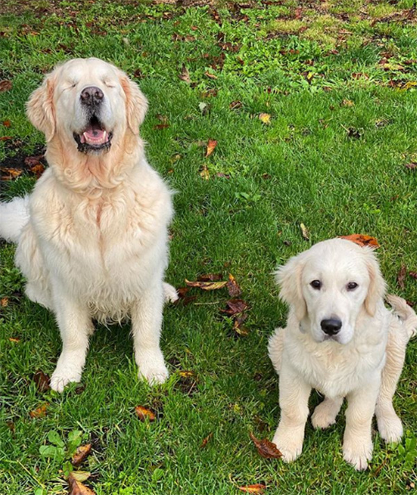guide dog helps blind dog