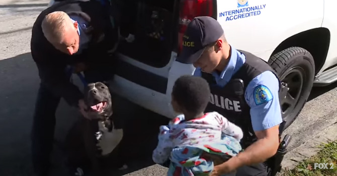 stray pit bull guards lost toddler
