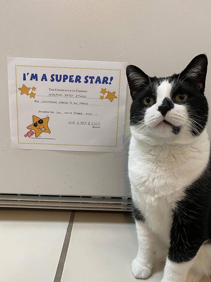 cat super star award
