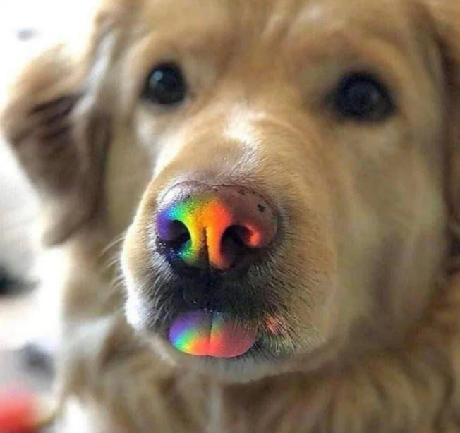 dog rainbow nose