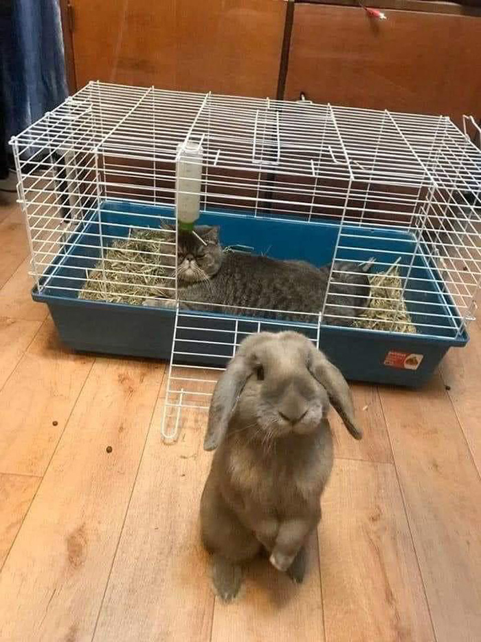 cat in bunny cage