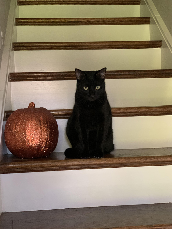black cat not thrilled about halloween