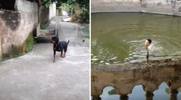 Dog Reacts To Owner 'Drowning' In Pool