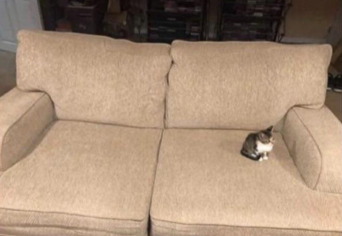 tiny kitten on big couch
