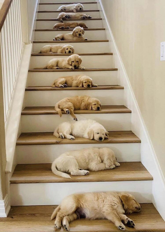 stairway to heaven dogs