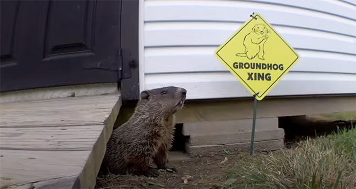 man builds garden for groundhogs
