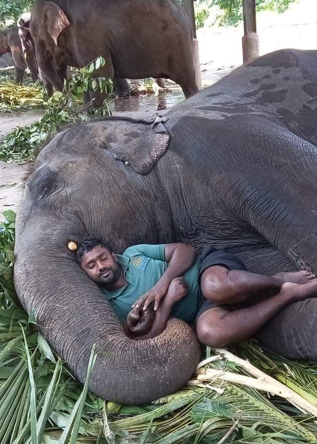 elephant and caretaker