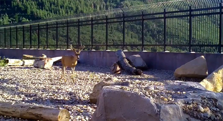Utah wildlife overpass video